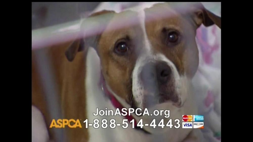 Animal Shelter Commercial Talking Cats